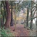 TQ5093 : London Loop walk through Havering Country Park  by Roger Jones