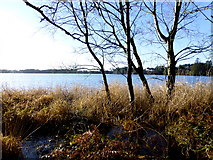 H5776 : Trees and withered grasses, Loughmacrory by Kenneth  Allen
