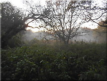 TQ1665 : Mist and woodland on Stokes Field by David Howard