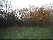 TQ1665 : Stokes Field, Long Ditton by David Howard