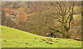NY3705 : Small building at edge of Low Sweden Coppice by Trevor Littlewood
