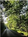 SU2565 : Road across Bedwyn Common by Derek Harper