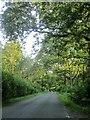 SU2567 : Road through Cobham Frith by Derek Harper