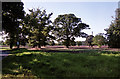 SE7824 : Farmland near Saltmarshe by Stephen Richards