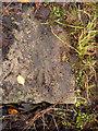SK6989 : Rivet bench mark, Eel Pool Road, Mattersey by Alan Murray-Rust