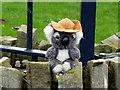 H4572 : Koala bear, Omagh by Kenneth  Allen