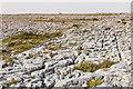 M2203 : Limestone pavement by Ian Capper