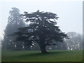 NY5170 : A misty morning at Dormanstead by Oliver Dixon