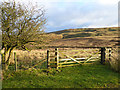 NY5673 : Gate onto the moors at Tower Brae by Oliver Dixon