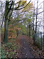 SJ4332 : Footpath in the woods by Cole Mere by David Smith