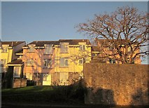 SX9065 : Houses on St Vincent's Road, Torquay by Derek Harper