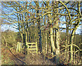 SE9330 : Kissing Gate into Woodale Plantation by Ian S
