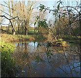 SK6464 : Wetlands, Rufford Abbey Country Park, Notts. by David Hallam-Jones