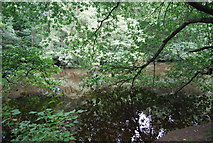 SE3158 : River Nidd by N Chadwick
