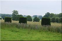 TQ5244 : Topiary, Penshurst Park by N Chadwick