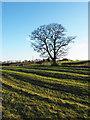 NZ1728 : Ridges in field by Trevor Littlewood