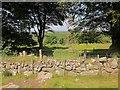 SX5384 : Ruins of Doe Tor Farm by Derek Harper