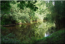 SE3258 : The Nidd Gorge by N Chadwick