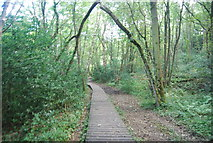 SE3258 : Boardwalk, Bilton Banks by N Chadwick