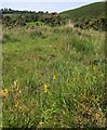 SX5384 : Bog by the Lyd by Derek Harper