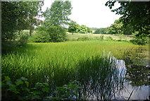 TQ5244 : Pond, Penshurst Park by N Chadwick