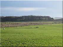 NY9179 : Farmland north of Cowden by Mike Quinn