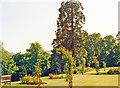 NT5034 : South-west in garden of Kingsknowe Hotel near Galashiels, 1988 by Ben Brooksbank