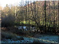 NU1433 : Wooded pond near Waren Burn by Andrew Curtis