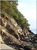 SX9363 : Cliffs showing strata at Meadfoot by David Smith