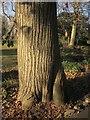 SX9265 : Sweet chestnut, Tessier Gardens by Derek Harper