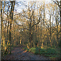 TQ8087 : Path in West Wood, Daws Heath by Roger Jones