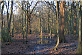 TQ8088 : Wet ground in winter, West Wood, Daws Heath by Roger Jones