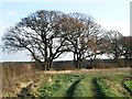 SE4471 : Winter trees along Ewe Hole Lane by Christine Johnstone