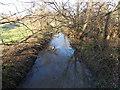 ST8026 : River Stour near Buckingham Road, Gillingham by Jaggery