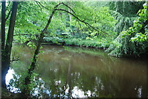 SE3357 : River Nidd by N Chadwick