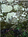 SJ5402 : OS benchmark - Acton Burnell, wall by Richard Law