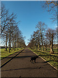 TQ2897 : Avenue of Lime Trees, Trent Park, Cockfosters, Hertfordshire by Christine Matthews