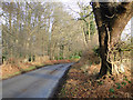 TG4900 : The Dell, Lound by Adrian S Pye