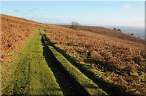 SO2718 : Footpath on the slopes of Sugar loaf by Philip Halling