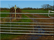 SU6514 : Looking along footpath going north from Pitt Hill Lane by Shazz