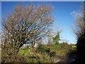 SX2969 : Junction, Middlehill by Derek Harper