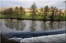 SO5074 : Trees reflected in the River Teme by Philip Halling