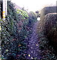 SJ2937 : Shropshire Way track in Chirk Bank by Jaggery
