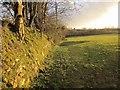 SX2569 : Field boundary near Darite by Derek Harper