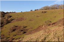 SU6022 : Looking across the steep side of Beacon Hill by Peter Facey
