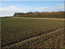 TL4538 : Field beans and the path to Chrishall by John Sutton