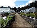 SO9308 : Path between greenhouses in Miserden Nursery by Jaggery