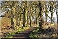 NO5435 : Path and strip wood by Richard Webb