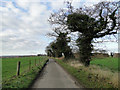 TG4003 : Limpenhoe Road by Adrian S Pye