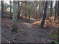 SU9157 : Pine woods, Porridgepot Hill by Alan Hunt